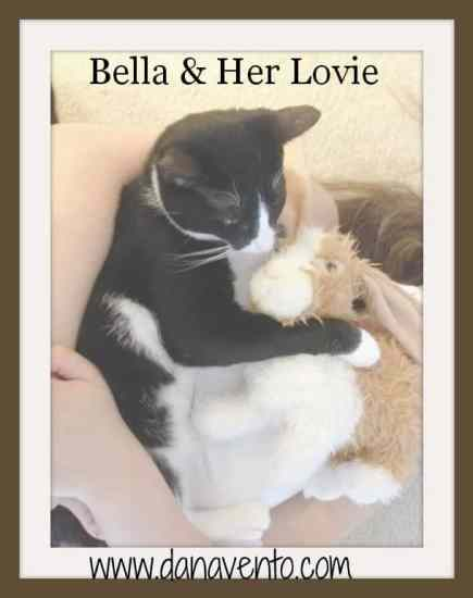 cat must-haves, bella the cat, cats, kittens, toys, mental, physical, emotional, physical, social, cats have needs, dana vento