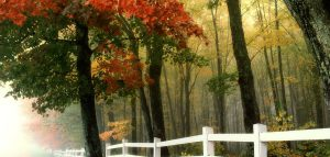 fall leaves turning colors white picket fence forest