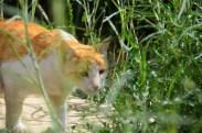 a cat on the prowl on FOB Bullard