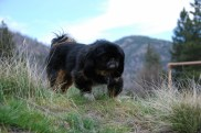 Molly in Montana, April 2009