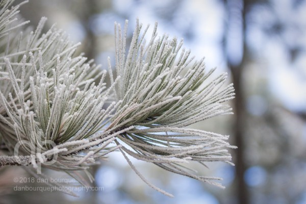 Frosty Brushes photo by Dan Bourque