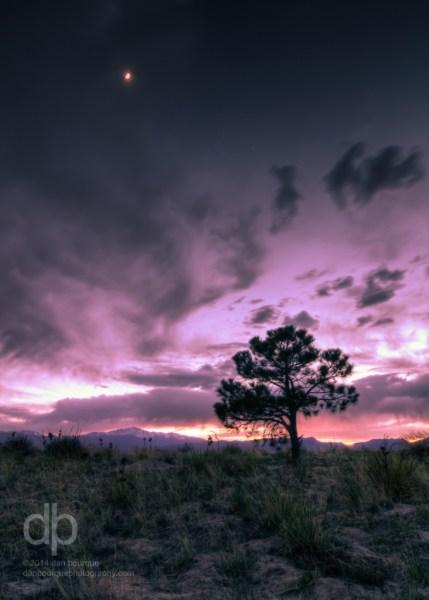 Pine Against Pink Sky landscape photo by Dan Bourque
