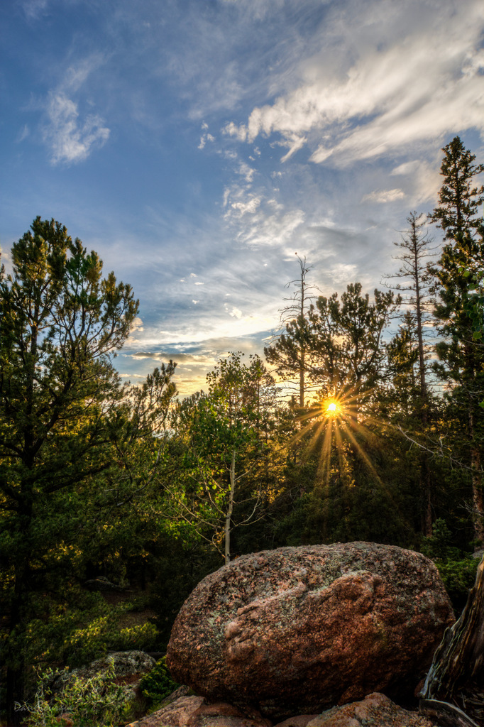 Rays Through the Pines landscape photo of Mueller State Park Colorado by Dan Bourque