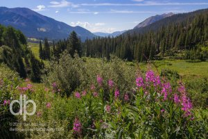 Rocky Mountain Summer Sublime landscape photo by Dan Bourque