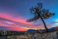 Solitude at Sunset landscape photo Garden of the Gods Colorado by Dan Bourque