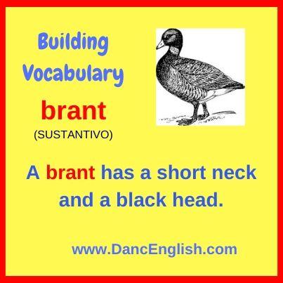 brant-incrementa-vocabulario-ingles