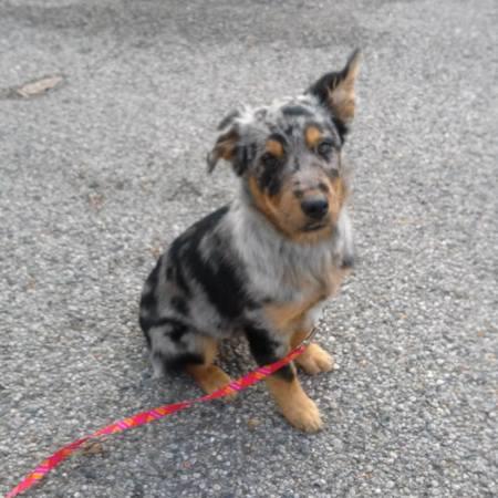 a dog names Roxie