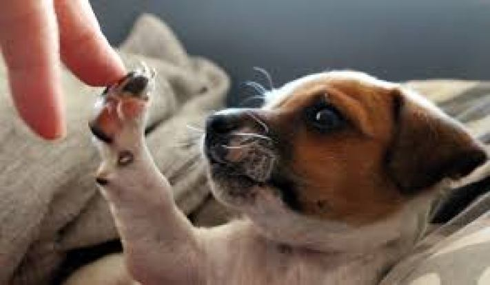 Fresh starts include puppy high-fives.
