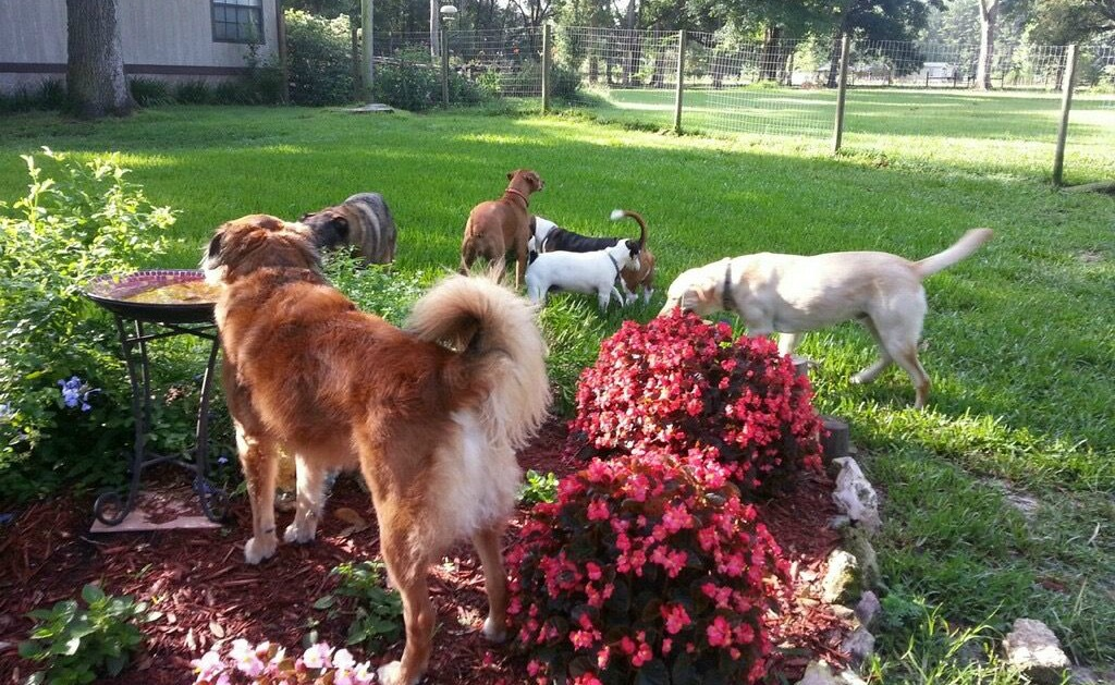 Dogs at Birdfeeder