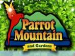 parrot-mountain