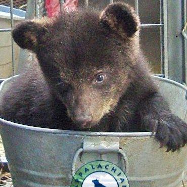 Appalachain-bear-rescue-cub