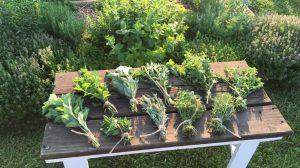 Summer Making Series ~ DIY Herb/Flower Drying Board