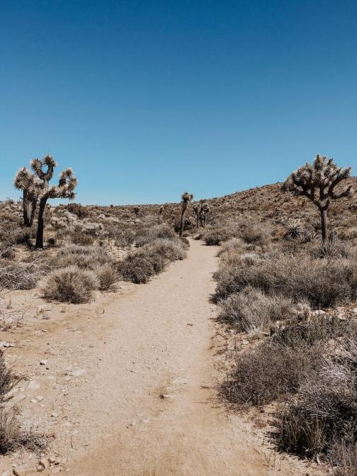Joshua Tree + Palm Springs | Dancing for Donuts