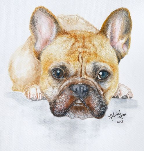 Gus Gus the Frenchie
