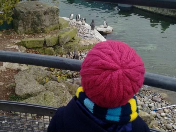 Marwell Penguin Enclosure