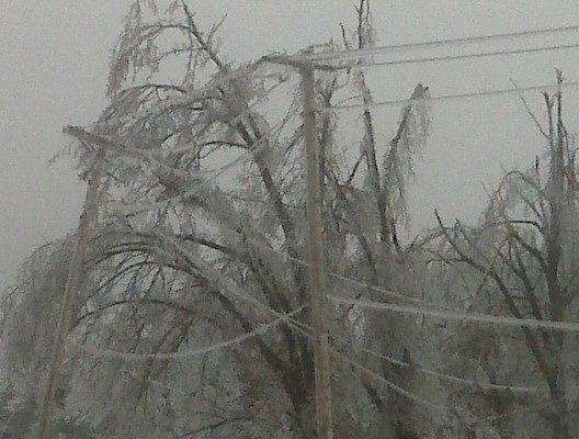 trees and powerlines heavy with ice