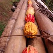 National cacao pods all in a row at Cooperativa Nueva Esperanza,Puerto Quito, Ecuador