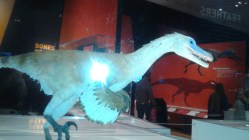 Dino Bird Hunger