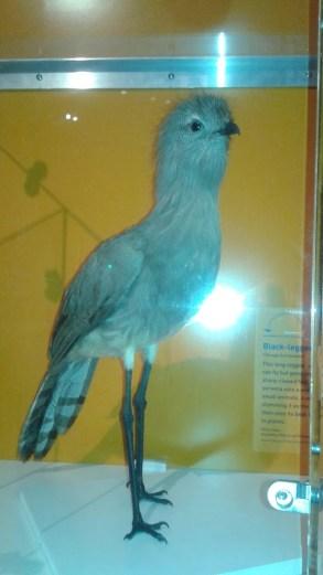Giant Dino Tweety Bird