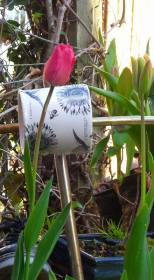 cup and tulip flower