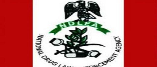 ndlea large