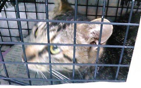 保護猫|野良猫の寿命は三年