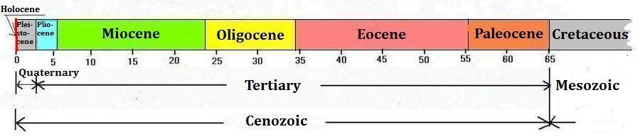 Cenozoic, Tertiary and Quaternary