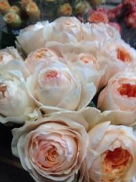 Juliet Garden Roses
