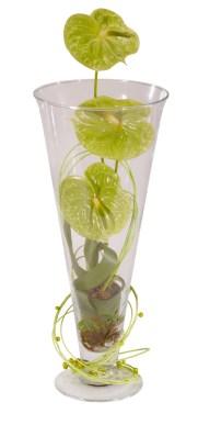 green anthurium