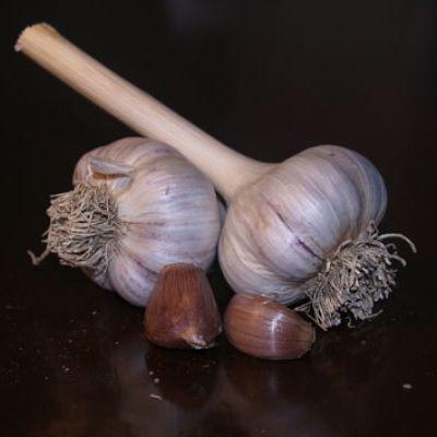 Italian Garlic