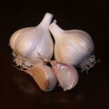 Mennonite Garlic