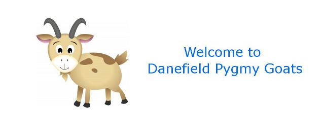 Danefield-Pygmy-Goats