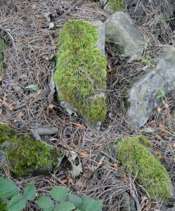 Mossy stones...dank and green.