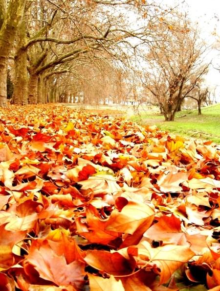 autumn-1402893-639x843