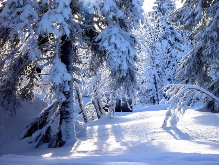 snow-1-1460879