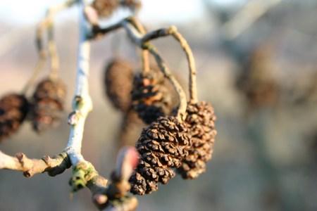 autumn-twig-1385533