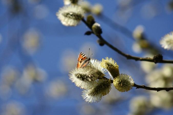 spring-1376144