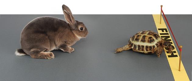 tortoise-vs-hare