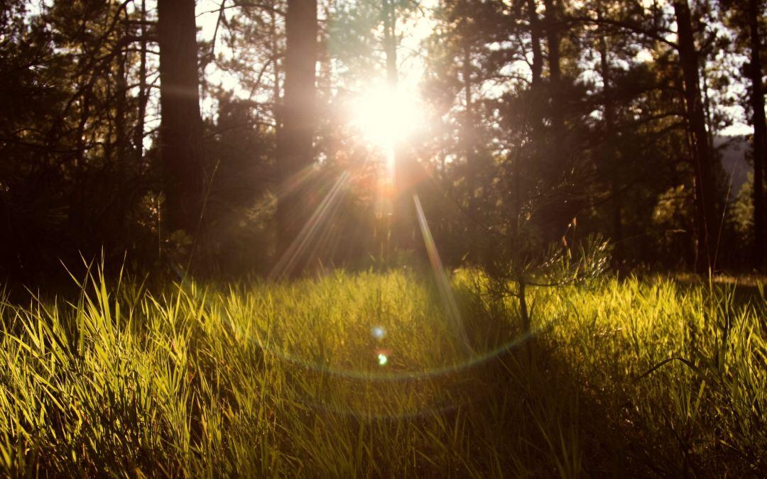 Om meningen med livet, målsättning och att sitta på en sten i skogen