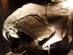 デボン紀最強魚ダンクルオステウスの絶滅理由とは?噛む力やメガロドンとの関係! – 世界の超危険生物 ...
