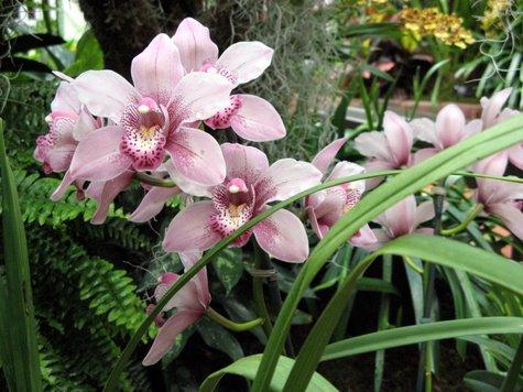 orchid-3827.jpg