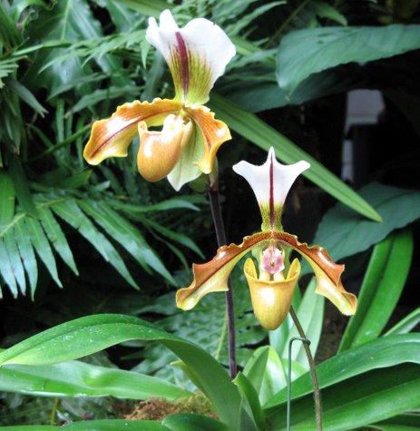 orchid-3859.jpg