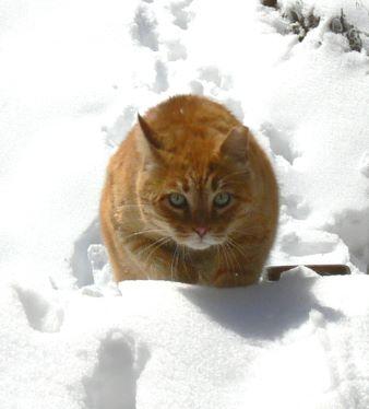 Maori in the snow