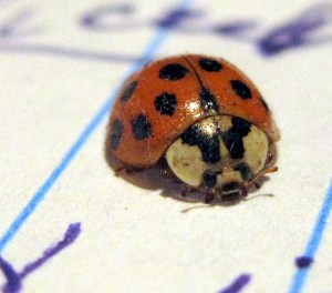 beetle-on-pad-of-paper