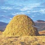 haystack needle