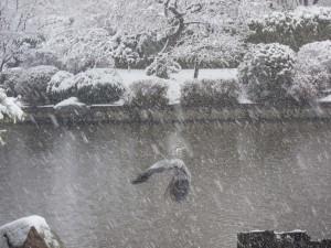 IMG_9342 Snow MBG - evv