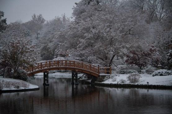 IMG_1429 MBG Snow