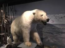 Eisbär (kein echter)