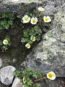 Blumen in einer kargen Landschaft