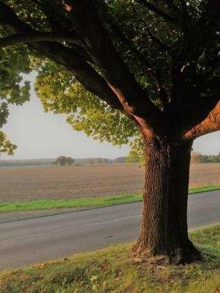 Landstraße im Herbstlicht